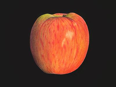 Pomme (crayon aquarelle)